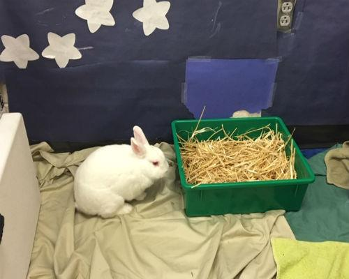 white rabbit near green plastic bin of hay