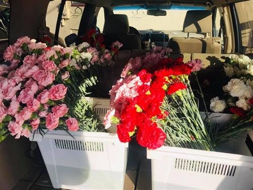 pink, red, and white carnations in white buckets